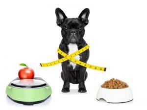 Übersicht Futtermenge für Welpen, Junghunde und erwachsene Hunde